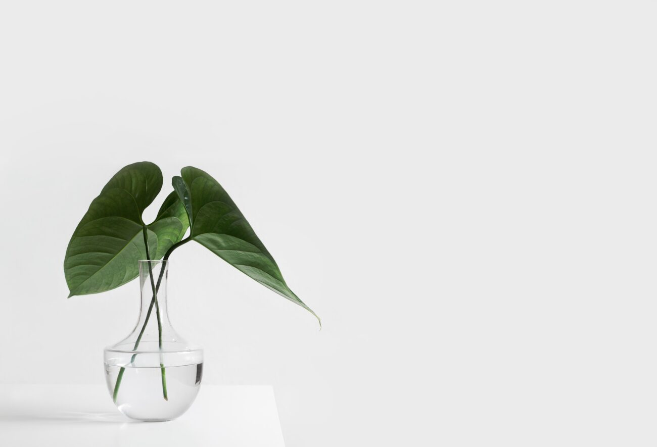 Sustainability, a new challenge for Marketing